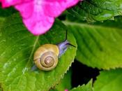 What's Bugging You? Guide Garden Pests
