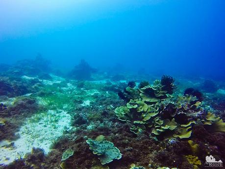 Climaco Dive Site