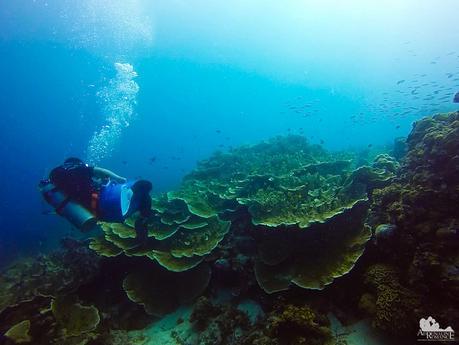 Leaf Corals