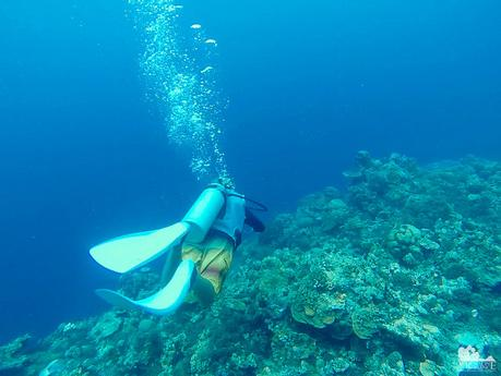Agus Dive Site
