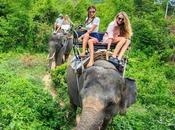 Accidentally Inflicting Animal Cruelty Your Vacation?