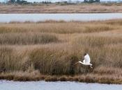 Island National Refuge Birds! Humans Visit. [OBX,