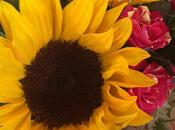 #hiddenflowermeanings