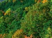 Background World Conservation