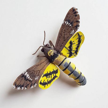 Death's-Head Hawk Moth by Kate Kato