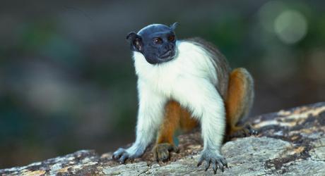 Wild and Wonderful Tours in the Brazilian Amazon