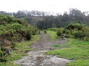 Five 'not Touristy' Things While GReat Trails, Kodaikanal