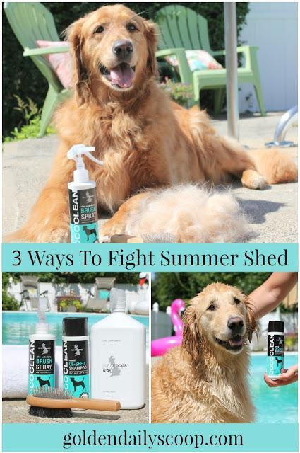 how to reduce shedding in the summer for golden retriever dogs