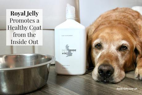 royal jelly supplement to help fight shedding dogs