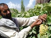 Improving Afghanistan's Economy from Bottom