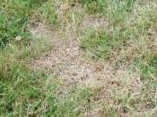 When Fertilize Your Florida Lawn