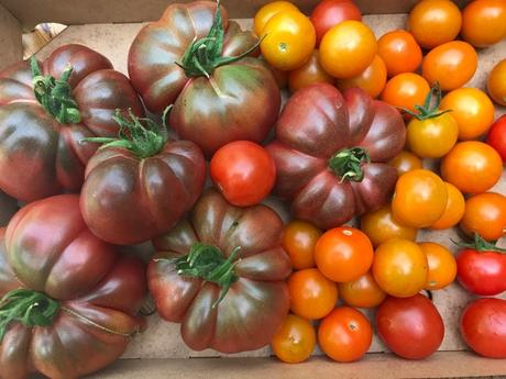 Tomatoes with Everything