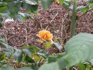 Roses - Memories