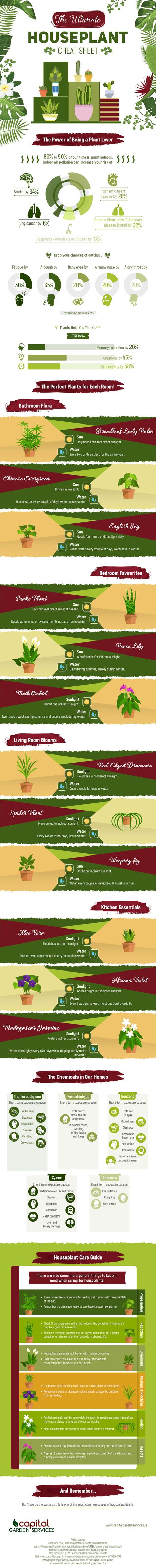Infographic – The Ultimate Houseplant Cheat Sheet