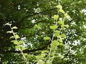 Tree Following August 2017 Phantasmagoria