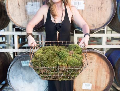 The Vine Staghorn Workshop