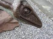 Fall Titanosaurs