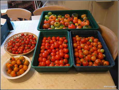 The tomato-processing factory