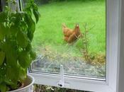 Chicken Window ....