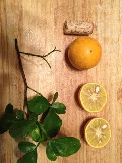 Please Help My Citrus Tree!!