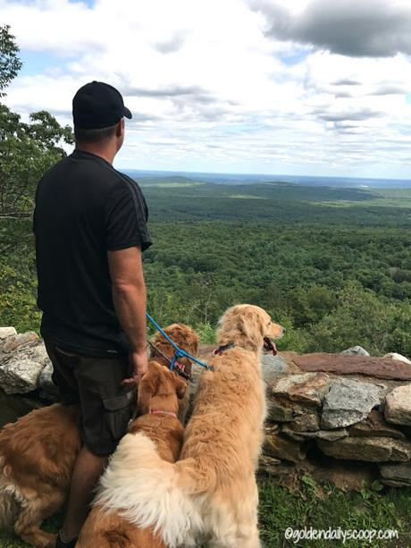 golden retrievers hiking a mountain