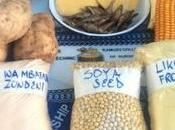 Monsanto Write Malawi's Seed Policy?