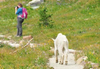 GLACIER NATIONAL PARK: A bad day at Logan Pass (not really) Guest post by Caroline Hatton