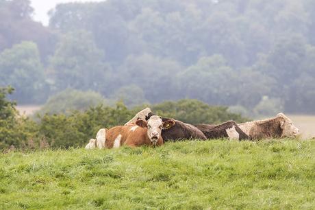 Let Sleeping Cows lie