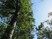 European Heritage Days Weekend: Visit Haillan's Domaine Catros Arboretum