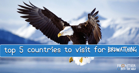 Top 5 Countries to Visit for Birdwatching