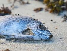 Causes, Effects Solutions Ocean Dumping