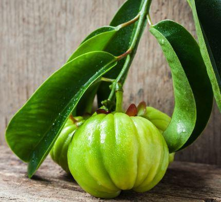 How to Spot a Garcinia Cambogia Free Trial Scam