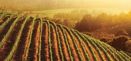 California Vineyard. Image ©TheWineInstitute