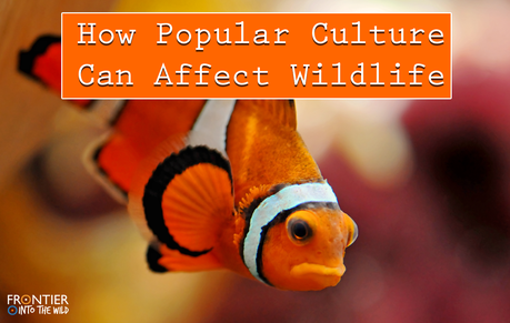 How Popular Culture Can Affect Wildlife