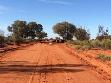 An Outback Road Trip – How to Survive