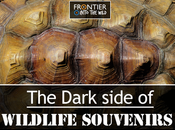 Dark Side Wildlife Souvenirs