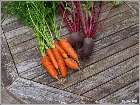 Still harvesting carrots and beetroot