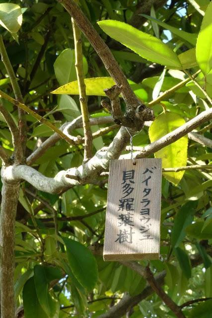 Kansai Diaries, Day 3: Horyuji, Hokkiji, and Some Japanecdotes in Ikaruga Town