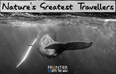 Nature's Greatest Travellers