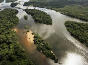 Death 1,000 Cuts: Forest Carbon Sink Disappearing