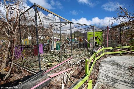 Hurricane Irma struck St Maarten; looters took over stealing rare animals too !!