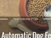 Best Automatic Feeder Reviews (2017 Round-up)