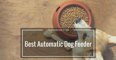 Top 5 Best Automatic Dog Feeder Reviews (2017 Round-up)