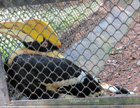 A visit to the Bannerghatta Biological Park in Bangalore