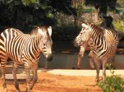 Visit Bannerghatta Biological Park Bangalore