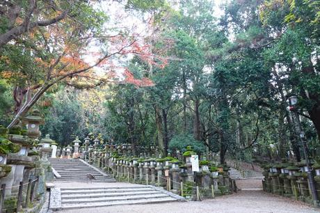 Kansai Diaries, Day 4: Early Morning at Nara Park