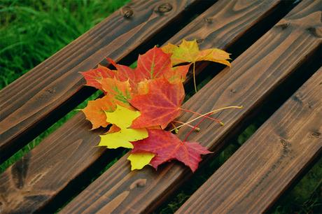 Great landscaping tips for the fall