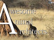 Animal Architects