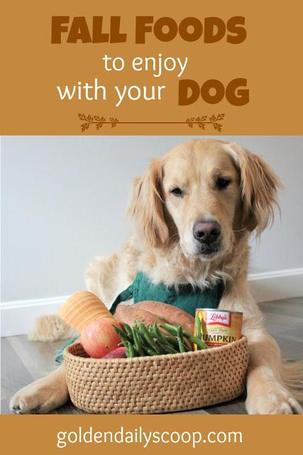 five healthy foods that are safe for dogs