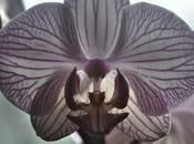 Orchids Home Grown Flower